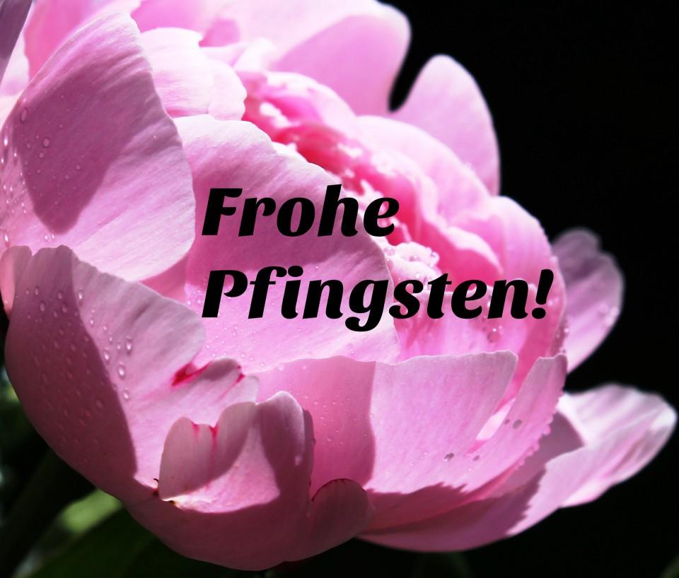 """Pfingstrosen """"10G30T"""